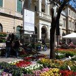 #Treviso tra i #fiori ancora più bella! #Buongiorno a tutti #Foto di Paola Guidolin http://t.co/3qLt6uxaIr