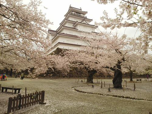 鶴ヶ城では桜吹雪が楽しめます。 #会津華たび #会津さくら http://t.co/Mmcpqt18c5