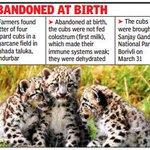 Third leopard cub too dies of malnutrition at national park http://t.co/V8zE8mlqxT via @TOIMumbai http://t.co/ILgWJmCijN