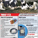 New dressing from abattoir waste developed that heals wounds http://t.co/jPVuondBxU via @TOIChennai http://t.co/ofZw47vYuW