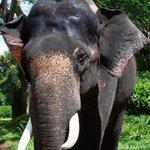 Dalma elephant shot dead by Bangla troops http://t.co/BuUzk2qkBY http://t.co/hn99byoSAH