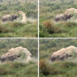 Delightful! An #Elephant cools down in #Indias summer heat via @rahulrzen @guardian http://t.co/g4xOYldeSN http://t.co/B1N1EyGHsP