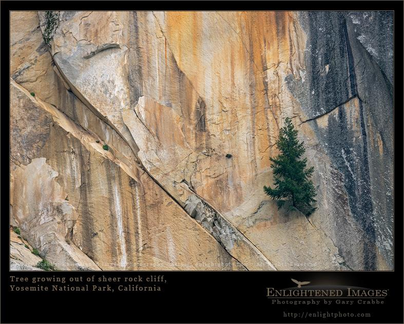 A photo in need of a great Motivational Poster quote; got one? Tree on cliff in #Yosemite @YosemiteNPS http://t.co/NoAkwTtxym