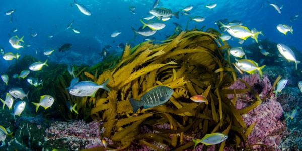 Did you know that the #ocean covers 71 percent of the Earth's surface? Happy #EarthDay! http://t.co/qUhCKCjPiS