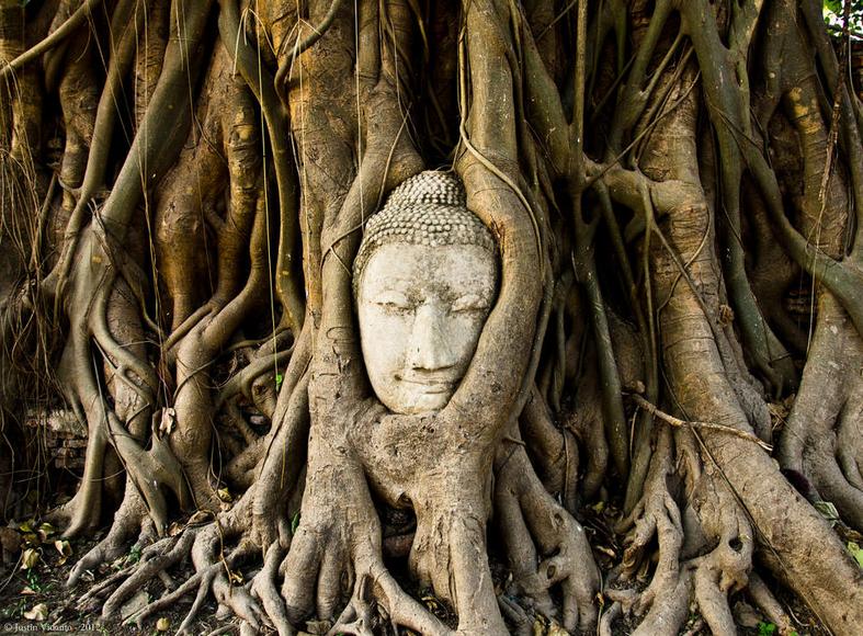 10 arbres qui invitent au voyage, pour clore dignement cette Journée de la Terre : http://t.co/s9U99MRv8s http://t.co/tplP3sEuWt