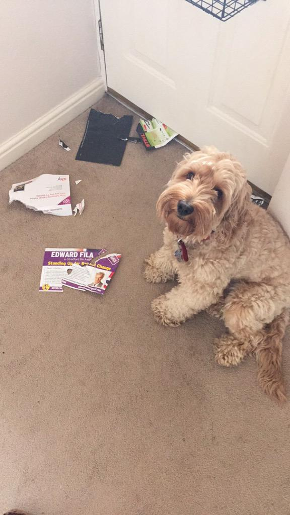 Got home to find my dog has torn up the @UKIP flyer, glad to see he knows his politics! http://t.co/V2oEpVe2KN