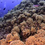 Fields of coral on the blue edge, Curacao. #underwaterphotography #JoeQuinn #Curacao #scubadiving http://t.co/4HyjiR7WNK
