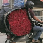 Morning delivery of red roses coming to your florist .