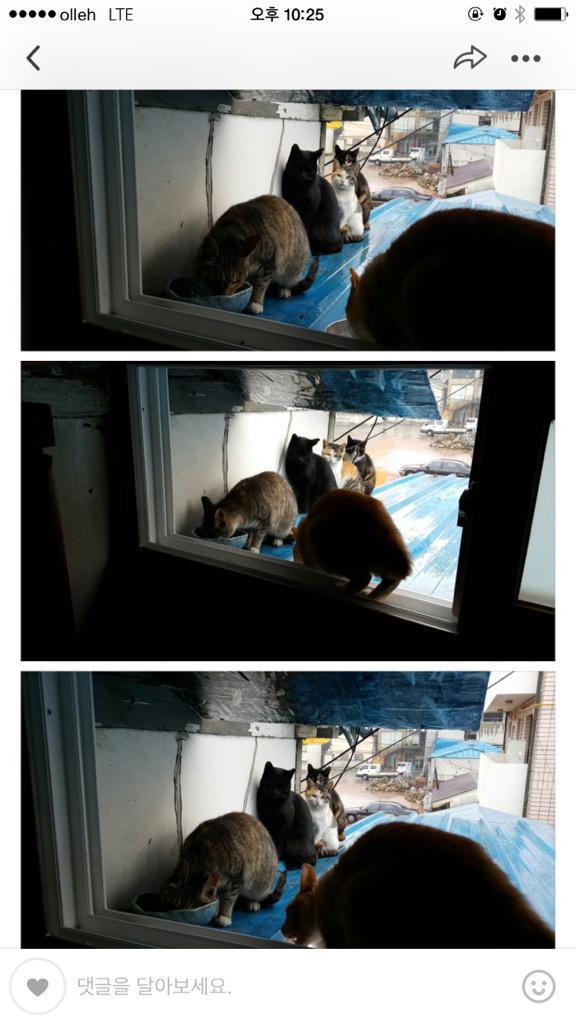 운전을 하다보면 무대뽀로 끼어들거나 좌회전차선 맨앞으로 들이대는 양심불량 차주들이 넘 많다 이들은 사진의 고양이들보다 못한 인간이다 사진은 길고양이들로 간식을 먹기위해 줄서서 기다리고있는 모습으로 지인이 찍었다 http://t.co/3RIrsqXcAh