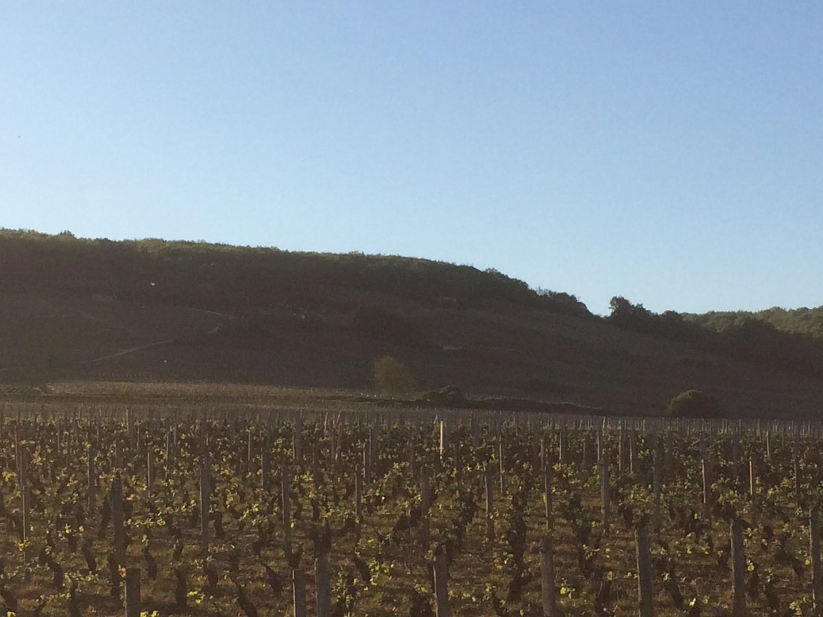 Vosne Beaux-Monts in the shade while Echezeaux gets another 15 mins sunlight. Many other Grands Crus already shaded. http://t.co/AjVtkiQf2Z