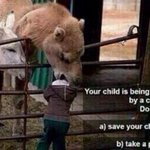 RT @WolfpackAlan: Your child is being eaten by a camel, do you: a) Save your child. b) Take a picture.
