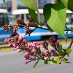Kwitnący #wroclaw http://t.co/Jnr5L3UszB