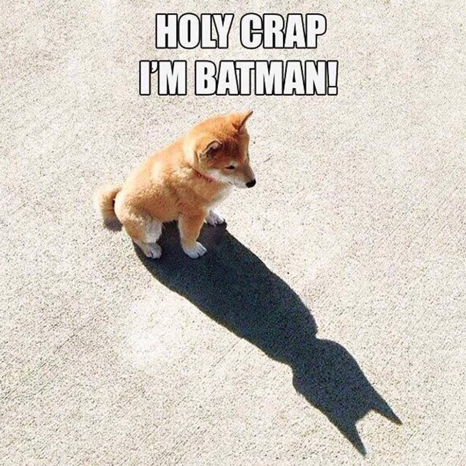 @The_Tardis_Toms @CocosWordofDay @chelleloulou @MrMoustacheCat @HessieD @ttsnoopy @FSBull @Barron00 M: Found batman! http://t.co/x6PNyb1DHG