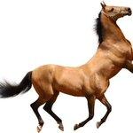 Встречайте — коньтавр! Наполовину конь, наполовину конь http://t.co/uWs2Lmc1IP