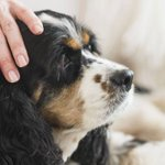 Aprende a cuidar a tu mascota cuando envejece ► http://t.co/MVOaKASeRn http://t.co/vAnSCj2SCq