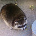 Если бы я был животным, то выглядел бы так http://t.co/Q5FRlLupFI