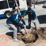 #AFCAA Plants Downtown Tree for Arbor Day http://t.co/3JWxdWEwXo #VisitAnnArbor #ArborDay2015 #StrengthInTheOak http://t.co/j9J1Ub4Wdy