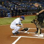 "This K-9 that was bitten by a rattlesnake ""threw"" out the first pitch at @RaysBaseball game: http://t.co/x9WbS0uYNZ http://t.co/A4zdfYW87m"