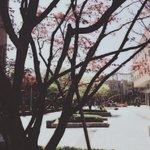 """""""@shfly3424: 봄날들 🐌 http://t.co/IqYKMJfXgq""""😘"""