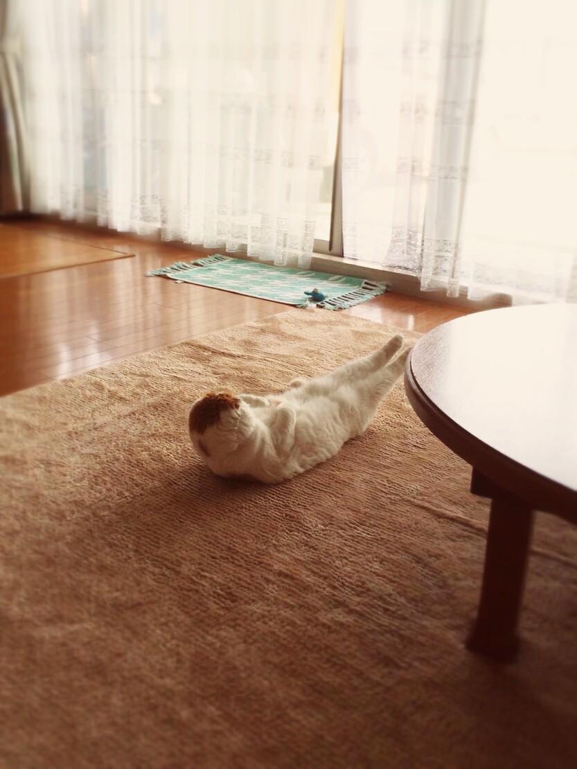 女子高生の脚ってイイよねぇぇぇ 82脚目 [無断転載禁止]©bbspink.comxvideo>1本 ->画像>2811枚