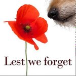 We remember the people and animals who have served for our country. Lest we forget. http://t.co/zqJRWGPWZt