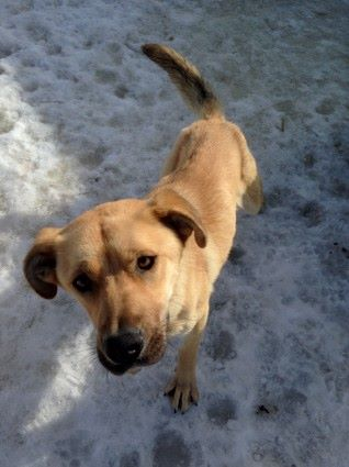 #AdoptionEvent: Meet Clementine, Taz, and Maho tomorrow from 12-3 at Sadie's K9 Stay&Play on Arygll Road #yeg http://t.co/I43iwt32qF