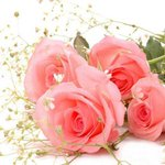 Selamun aleykum  Güller kadar güzel bir Gün olsun cümlemize  Dikenine dikkat batmasın :) İnşallah Sabahul hayr http://t.co/KmXzZ6ENlh