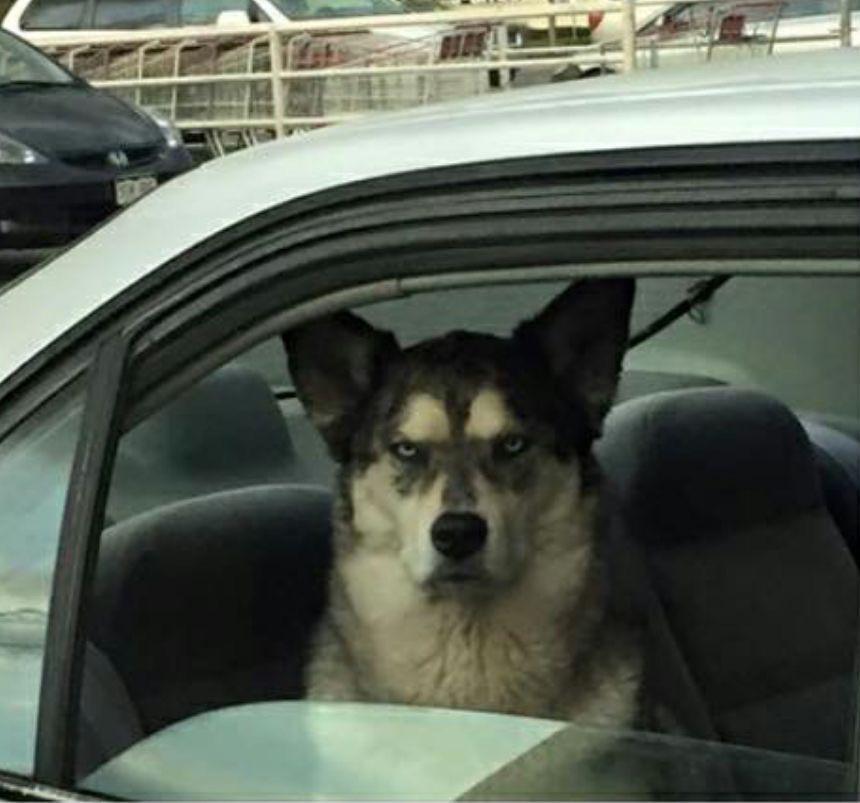 When you owe a dog money http://t.co/llGzMdUZ3U