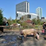 La ferme Marcel-Dhénin de #Lille, un îlot de verdure au milieu d'un océan de béton http://t.co/v0iLtZWdtV http://t.co/EzYdyLfJvH