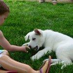 Niña con discapacidad y un perro sin pata son los mejores amigos http://t.co/WCMWOBjODb http://t.co/kvObKDFDSg