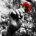Revolución de los claveles #25deAbril una revolución pacífica puso fin a una dictura. http://t.co/Ts8fwaifST
