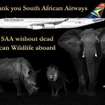 .@NickyAACampbell .@rickygervais @flySAA_US A huge salute to South African Airways. No more hunting trophies carried. http://t.co/AiVmr0nCcM