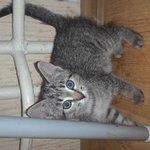 Найдена кошка котенок г.Санкт-Петербург http://t.co/1YXj9zD3Bj Санкт-Петербург! Найдена кошка http://t.co/GQZVFBwahg http://t.co/wTNdSsFN8n