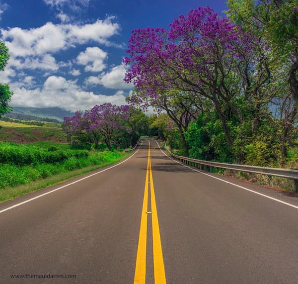 If you love #purple #maui #openroad > http://t.co/5cwt9ZfCWj via @AMauiBlog @TheMauiDarren #beauty http://t.co/G4szPv3Ipc