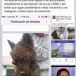 No podemos seguir tolerando salvajadas. (Imagenes fuertes), otro perro masacrado @riobamba #NoDestruyanNuestraLOBA http://t.co/84OYe1hkYW