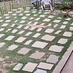 #Video Cámaras de seguridad captan momento del terremoto en #Nepal http://t.co/aE7PusCpZk http://t.co/GnGZvnHzhr