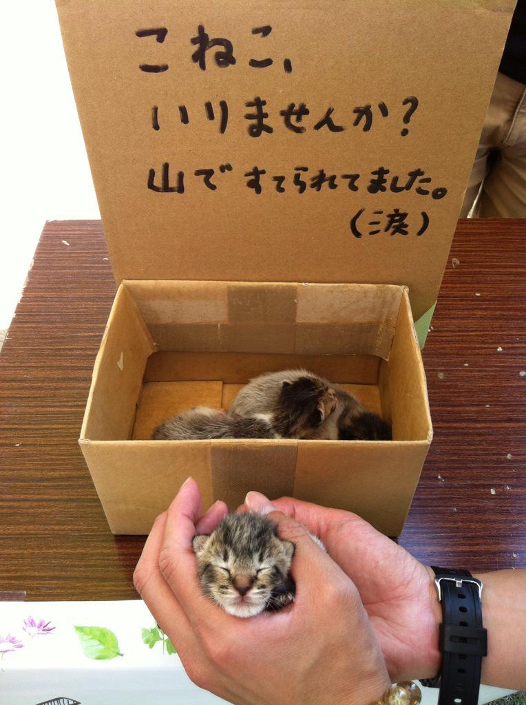 【拡散希望・里親募集】 香川の方へ。 今朝、山に産まれたての子猫が捨てられていたそうです。 現在KITOKURASUで預かっています。 飼っていただける方はこちらへご連絡下さい→ http://t.co/uH1SJnMTVn http://t.co/rG1FBLYFYt
