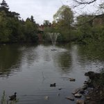 An exciting walk in Queens Park #Swindon this morning. The fountain is back on http://t.co/FVXBS3K2Lr