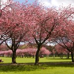 The Meadows was looking stunning this morning #Edinburgh http://t.co/LekDoFLk0x