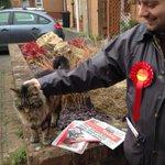 Matty making friends #catsforlabour #labourdoorstep #swindon http://t.co/f8uNQO2T5i