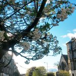 Blue sky and blossom over Montgomery St. A lovely end to the weekend in #Edinburgh. We hope you all had a good one! http://t.co/Ipnq6Vtoto