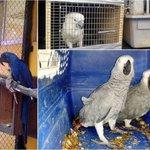 Asegura @PROFEPA_Mx 14 aves en #Tamaulipas que eran transportadas de manera ilegal http://t.co/RGLjWTcfdO http://t.co/UTexKHPcK7