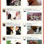 ???? RT @leestan_: We will miss you choco???????????? still remeber petwar with bugsy #RIPchoco http://t.co/kPCRn1DEVh