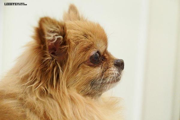 Rest in peace, Choco, Eunhyuk's 14 years old lovely dog. :( http://t.co/e1wf4BaGQw