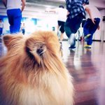 Our little princess Choco, please watch over the boys from heaven. We will miss you so much. #RIPChoco http://t.co/oih4E8CQjb