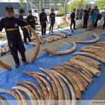 Thaïlande: saisie de plus de 3 tonnes divoire africain http://t.co/7DdZFJb8Zo http://t.co/t6iOW1PUcl #AFP