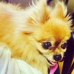 """""""@SUPERJUNlOR: [TRANS] Donghaes IG Update: Cute Choco ya... dont hurt in the heaven!! #RIPChoco http://t.co/xmRUp8XNhF"""""""