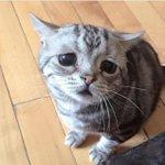 Tabah jugak orang yang bela kucin ni kena pujuk kucin ni tiap hari sebab dia sedih seumur hidup. :( http://t.co/LUwSocsWgD