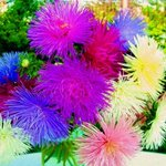 Morning! Have a Beautiful #MondayMotivation #flowers #inspiration via /Fenvir.com http://t.co/C17tVrSClJ