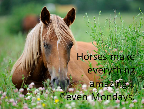 Wishing everyone some quality horse time on this Monday! #horses #lifeswithhorses #monday http://t.co/LJwQZkFm2T